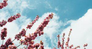 blomster til begravelse med bedemand